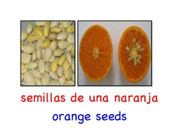 Where Do Seeds Come From? Dual language, bilingual book