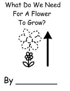 What Do We Need For A Flower To Grow?
