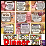 Where Does Your Dinner Go? Science Bulletin Board
