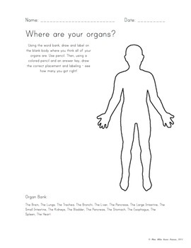 """Where are your Organs?"" Worksheet - Anatomy"