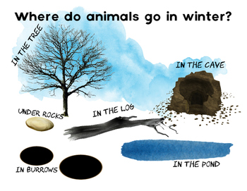 Where do animals go in Winter?