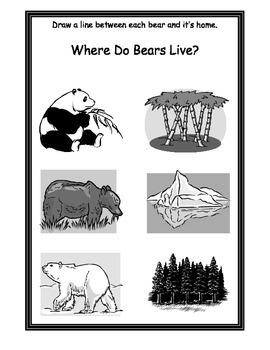 Where do bears live?
