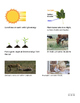 Where does food come from? Intro to photosynthesis