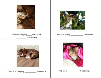 Where is/was the Cat? Preposition and Past Tense Mini Books - Real Pictures