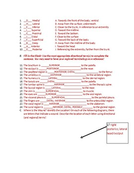 Where's the Wound directional anatomy & physiology terms worksheet