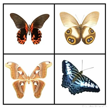 Which One Doesn't Belong - Insects