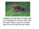 Which animals hibernate?