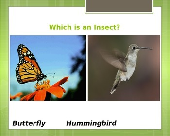 Insects-Insect Game-No Prep Work