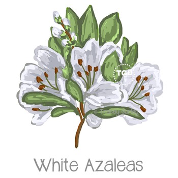 White Azaleas - azalea clip art, azalea Printable Tracey Gurley Designs