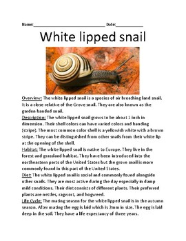 White Lipped Snail - informational article lesson facts questions word search