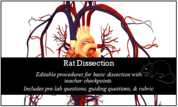 White Rat Dissection