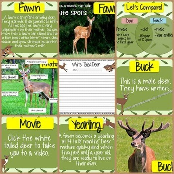 White-Tailed Deer Activities
