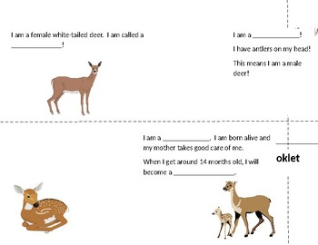 White-Tailed Deer Booklet