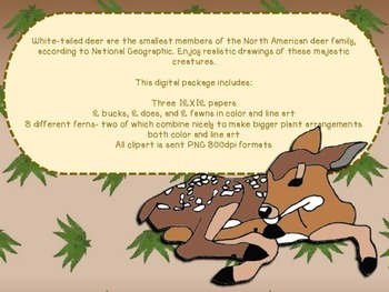 White-Tailed Deer Digital Papers and Clipart {for personal and commercial use}