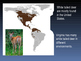 White Tailed Deer Information PowerPoint