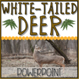 White-Tailed Deer Instructional PowerPoint