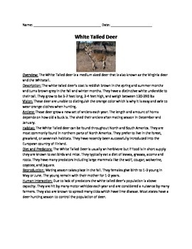 White Tailed Deer - Review Article Facts Information Vocabulary Word Search