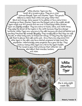 White Tigers: Two Complete Non-Fiction Reading Lessons