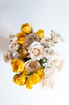 Free White & Yellow Roses Stock Photo