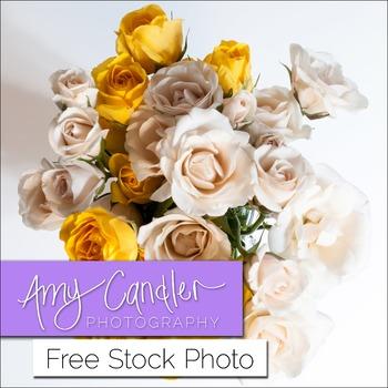 Free White & Yellow Roses Stock Photo