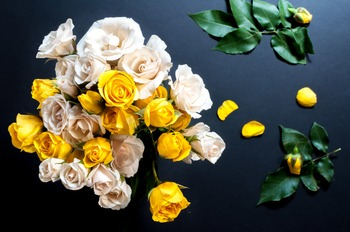 White & Yellow Roses/ Flowers Stock Photo Bundle