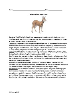White bellied musk deer - review article questions vocabulary facts information