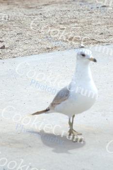 White pigeon at beach