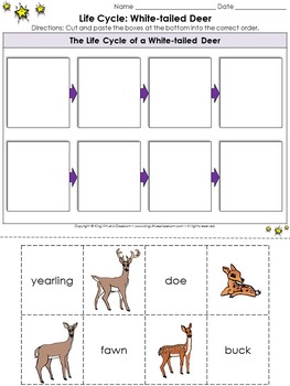 White-tailed Deer Life Cycle Sort Cut and Paste Activity #2 - Sequence