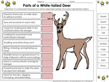 White-tailed Deer: Parts of a White-tailed Deer Cut and Paste Activity