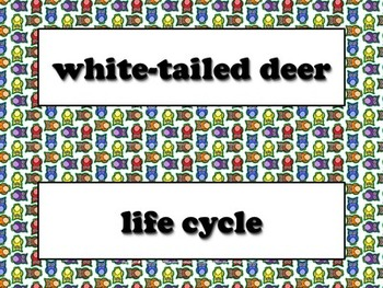 White-tailed Deer Vocabulary Strips - Life Cycles - Owls Theme - King Virtue
