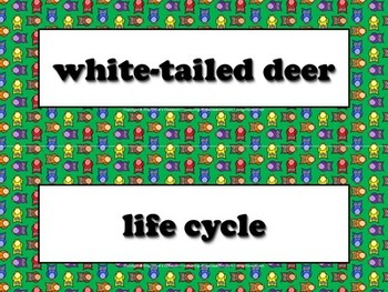 White-tailed Deer Vocabulary Strips - Life Cycles - Owls T