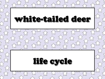 White-tailed Deer Vocabulary Strips - Life Cycles - Superstars - King Virtue
