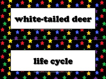 White-tailed Deer Vocabulary Strips - Life Cycles - Supers