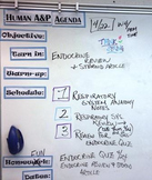 Whiteboard Magnet Agenda Headers - Create an organized classroom!