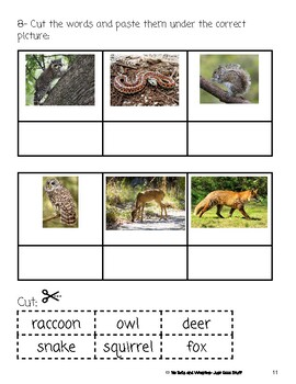 Who Lives in The Forest?- Informational Text (level 3-4)
