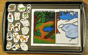 Rain Forest Adapted Book and Vocabulary Activities