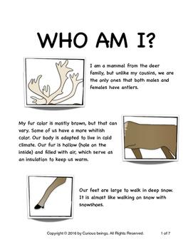 Who am I? Series - Caribou