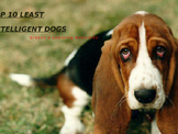 Mammals- Who are the 10 least smartest Dogs?