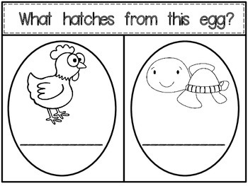 Who is Hatching from this EGG? {Booklet about Eggs}