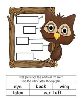 Who-o-o-o-o Knows About Owls?