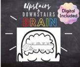 Whole Brain - Upstairs and Downstairs Brain