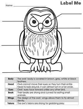 Whooootin' Owls Mini-Unit Common Core Aligned