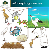 Whooping Crane Clip Art - Conservation Efforts