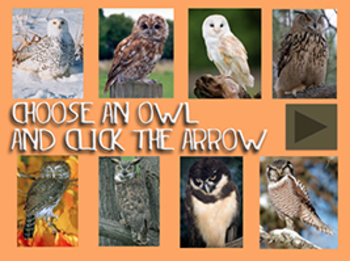 Who's Who?  Dichotomous Key Lesson using Owls