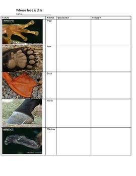 Whose foot is this worksheet NO PREP!!!