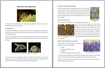 Why Bees Are Important - Science Reading Article - Grades 5-7