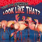 Why Do Animals Look Like That?