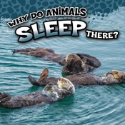 Why Do Animals Sleep There?