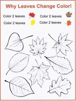Why Leaves Change Color!
