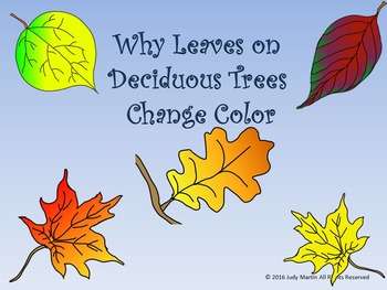 Why Leaves on Deciduous Trees Change Color